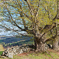 Stone Wall Spring Landscape by Alan L Graham