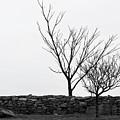 Stone Wall With Trees In Winter by Nancy De Flon