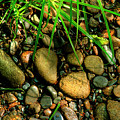 Stones Beside The Stream by Mike Eingle