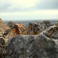 Stones by Chirag Patel