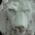 Stonework Leo by Belinda Consten