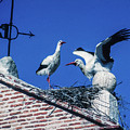 Storks Of Segovia by Mike Penney