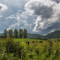 Storm And Cattle by Anthony Zeljeznjak