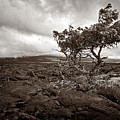 Storm Moving In - Sepia by Christopher Holmes