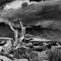 Storm Over Wheeler Crest by Chris Morrison