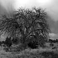 Storm Tree by David Lee Thompson