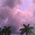 Storms In The Tropics by Margie Hurwich