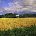 Stormy Old Barn In Wheat Field 2 by Anna Louise
