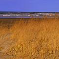 Stormy Walk On The Beach Ix Long Beach Washington by Jacqueline Russell