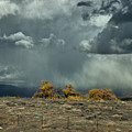 Stormy Wet by David Kehrli