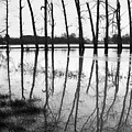 Stranded Trees II by Hazy Apple