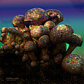 Strange Mushrooms 2 by Diane Parnell