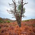 Strange Tree by Svetlana Sewell