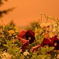 Strange Weather/flourished Flower by Phaelen Kuehne
