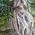Strangler Fig by Lisa Boyd