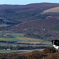 Border Collie In The Hills Above Strathspey by Phil Banks