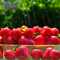 Strawberries And Summer Showers by Dick Hopkins