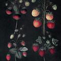 Strawberries by Granger