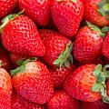 Strawberry  by Anastasy Yarmolovich
