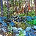 Strawberry Creek 1884 by Lisa Dunn