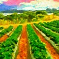 Strawberry Fields by Caito Junqueira