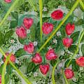 Strawberry Love Patch by Amy Barrow