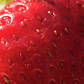 Strawberry Macro by Michelle Himes
