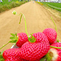 Strawberry Road by Jennifer Haley