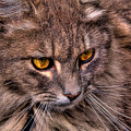 Stray Cat by David Patterson