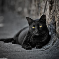 Stray Cat by Edgar Laureano