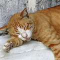 Stray Cat Sleeps On The Floor-1 by Tana Kosiyabong