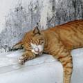 Stray Cat Sleeps On The Floor-2 by Tana Kosiyabong