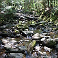 Stream by Clay Peters Photograhy