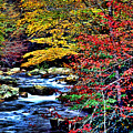 Stream In Autumn by Kevin  Sherf