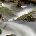 Stream In Motion by Jim DeLillo