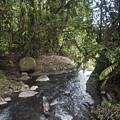 Stream In  Rainforest by Madeline Ellis
