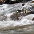Stream Nature Spring Scene by Goce Risteski