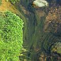 Stream Of Weeds I by Lori Lynn Sadelack