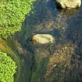 Stream Of Weeds II by Lori Lynn Sadelack