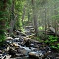Streaming Through The Trees by Alisha Jurgens