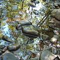 Stream's Edge by Suzanne Shepherd