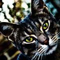 Street Cat II by Grebo Gray