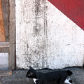 Street Cat by Jez C Self