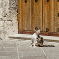 Street Cat Outside A Solid Wood Door by Rob Huntley