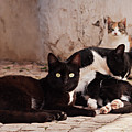 Street Cats - Portugal by Barry O Carroll