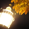 Street Lamp  by Trish Hale