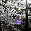 Streetlights In Blossoms by Michael Mathis