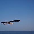 Stretch Away Up High by E Luiza Picciano