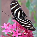 Striped Beauty - Butterfly by MTBobbins Photography