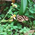 Stripped Butterfly by Gloria Byler